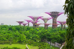 Garden by the bay ,Singapore Royalty Free Stock Photos