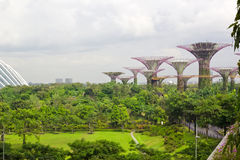 Garden by the bay ,Singapore Royalty Free Stock Photo