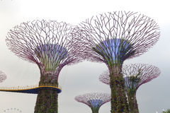 Garden by the bay - singapore Stock Images