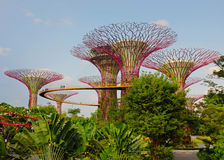Garden by the bay. Supertree grove in garden by the bay - singapore Stock Images