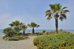 Garden in the beach Royalty Free Stock Image