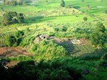 Garden. Beautiful poor garden in sigiriya village stock photo