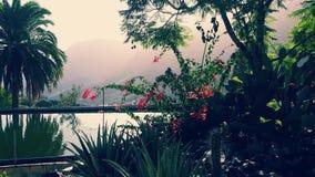 Garden. Beautiful view in village Fataga, Gran Canaria Stock Photo