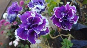 Garden beauty Stock Photos
