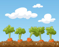 Garden bed. Cartoon garden bed with carrots, vector Royalty Free Stock Images