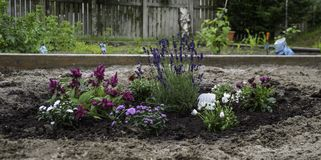 Garden bed with flowers. Raised garden bed with blooming purple flowers Royalty Free Stock Photography
