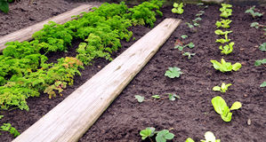 Garden bed planted Royalty Free Stock Photography