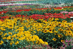 Garden Beds. A mile of garden beds show a beautiful array of flowers Stock Photo