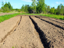 Garden-beds. Plowed field with garden-beds in the spring Royalty Free Stock Photo