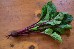 Garden Beets Stock Image
