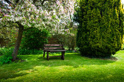 Garden bench. On spring time royalty free stock image