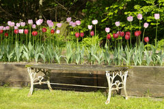 Garden bench and tulips. Old iron and wood garden bench with tulips behind Royalty Free Stock Photos