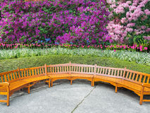 Garden bench. Under the rhodidendrons blooming in the spring Royalty Free Stock Images