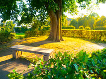 Garden bench under the tree in summer time park Stock Photography
