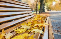 Garden Bench With Yellow Leaves In Autumn Royalty Free Stock Images