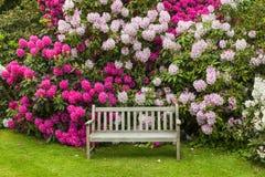 Garden bench. Stock Photos