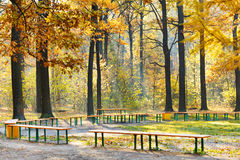 Garden benches in yellow forest in autumn Royalty Free Stock Photos