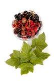 Garden berries Stock Images