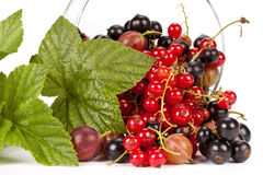 Garden berries Royalty Free Stock Photography