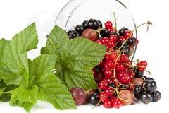 Garden berries Stock Photos