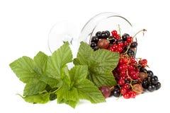 Garden berries Stock Photo