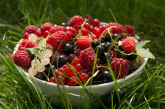 Garden berries in a bowl Royalty Free Stock Photography