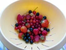 Garden berries Stock Image