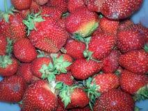 Garden berries Royalty Free Stock Photos