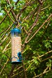 Garden bird feeder Royalty Free Stock Photos