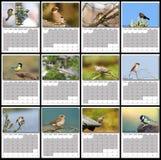 Garden birds calendar year 2016 Royalty Free Stock Photos