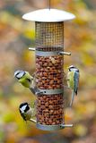 Garden birds on feeder stock photography