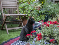 The garden - black cat chilling. The picture shows a black cat chilling in a garden stock images