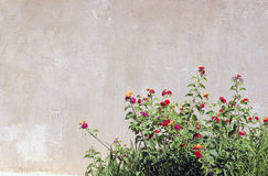 Garden and Block wall Royalty Free Stock Images