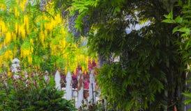 Garden in bloom stock image
