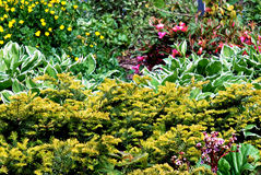 Garden in bloom Royalty Free Stock Photos