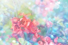Garden blooming flowers on a toned soft background outdoors . Spring summer floral background. Pink Garden blooming flowers on a toned colorful soft background stock photography