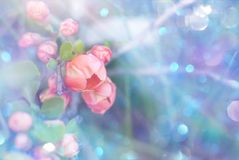 Garden blooming flowers on a toned soft blue background outdoors . Spring summer floral background. Garden blooming pink flowers on a toned soft blue background royalty free stock image