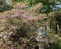 Garden Blooms and Statue Stock Image