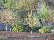 Garden blossoms. Gorgeous spring season. Rested trees awaken from winter sleep. It`s time to bloom.In lurking blossoming garden hut stock photo