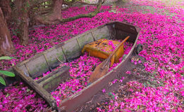 Garden Boat. Garden boat with a paddle, surround by pint pedals Stock Images
