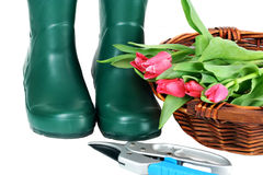 Garden Boots, Basket of Cut Tulips on White Royalty Free Stock Image