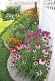 Garden Border with Echinacea and Bergamot Flower. A colorful backyard garden border with Echinacea and Bergamot flowers stock photos