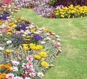 Garden border flowers Stock Images