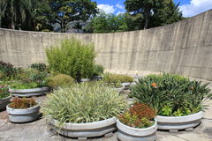 Garden. Botanic garden with plants and flowers Royalty Free Stock Images