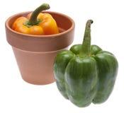 Garden Bounty Stock Image