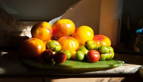 A Garden Bounty of Heirloom Tomatoes. Heirloom tomatoes piled high on a cutting board. The sunlight is dramatic, highlighting the striations of color in the Royalty Free Stock Photo