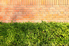 Garden brick and plant Stock Photography