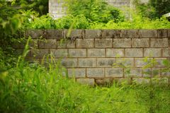 Decorative garden on a brick wall, green grass and trees background. stock photo