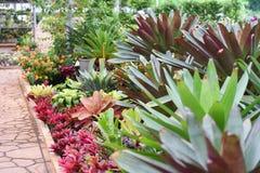 Garden bromeliad flower Stock Photography