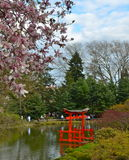 Garden at the Brooklyn Botanic Gardens on a Spring day, New York Royalty Free Stock Images
